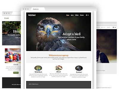 A selection of easy–to–customize website themes